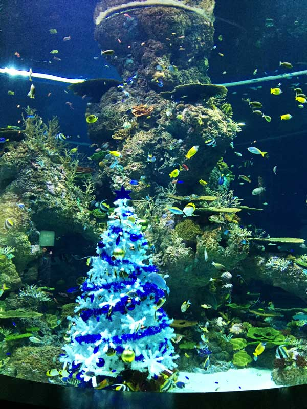 christmas-tree-fishmas