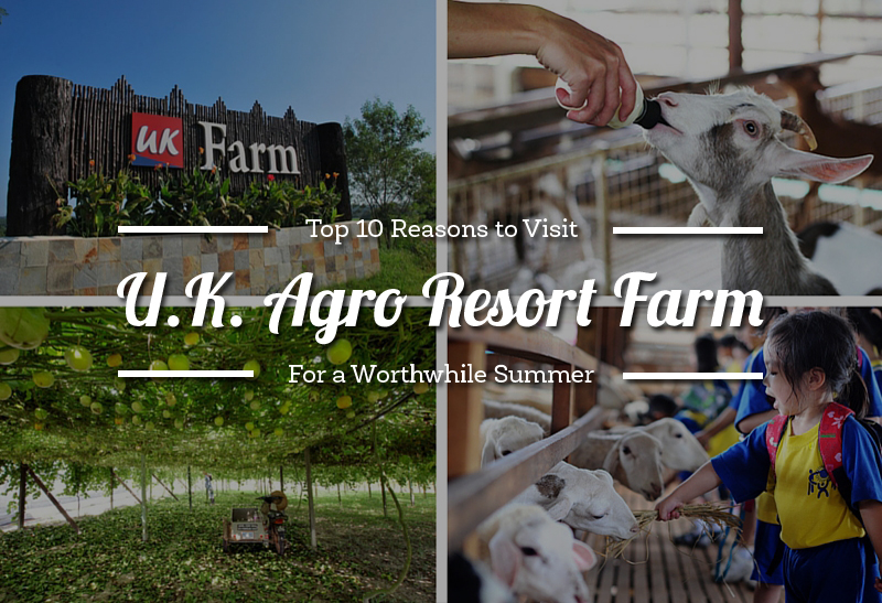 top_10_reasons_to_visit_uk_agro_resort_farm_for_a_worthwhile_summer-1
